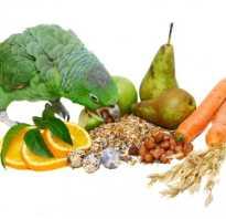 Какие витамины нужны волнистым попугаям