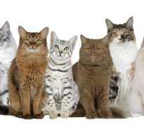 Породы котят фото с названиями