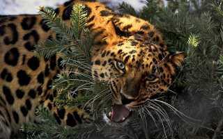 Исчезающие виды животных в россии