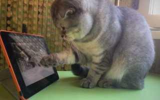 Видео для кошек мышки бегают