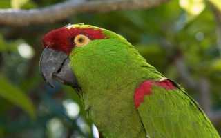 Продолжительность жизни попугаев в домашних условиях