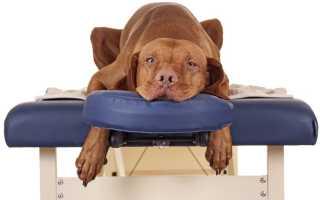 Что можно дать собаке от боли