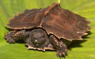 Интересные виды черепах