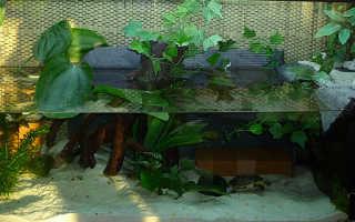 Акватеррариум для красноухой черепахи фото