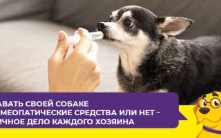 Веракол капли для собак инструкция