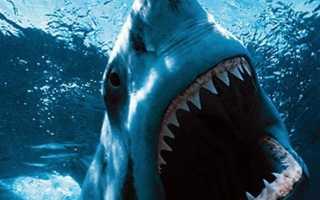 Опасна ли акула молот для человека