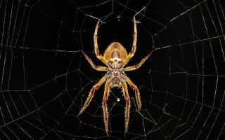 Почему девушки боятся пауков