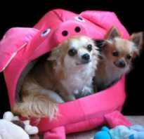 Виды туалетов для собак