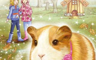 Книги про морских свинок