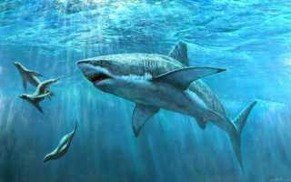Акулы спят или нет