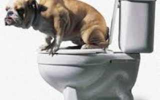 Наполнители для собак в туалет