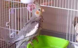 Поилка в клетку для попугая
