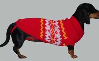 Как связать свитер для собаки пуделя
