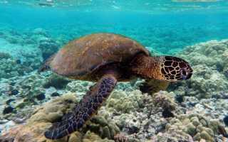 Морская черепаха фото