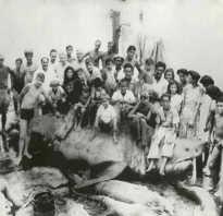 Какой длины самая большая акула