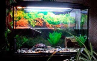 Акватеррариум для красноухой черепахи оформление