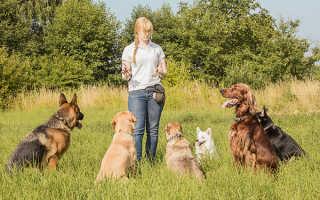 Руководство по дрессировке собак