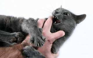 Как отучить кота кусаться видео