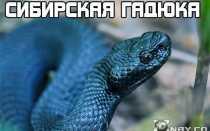 Какие змеи водятся в новосибирской области