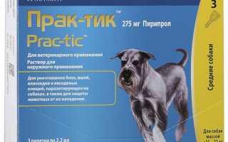 Глисты перед прививкой собаке