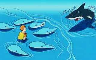 Дельфины спасают людей от акул