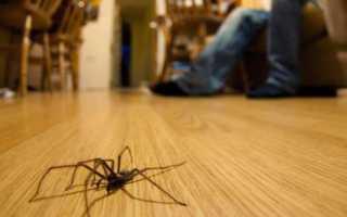 Где живут пауки в квартире