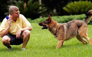 Все о дрессировке собак