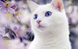 Виды рвоты у кошек