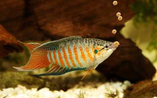 Рецепт корма для рыб