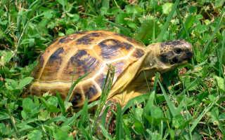 Черепаха в пустыне фото