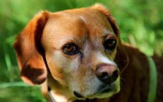 Лекарство от отита у собак