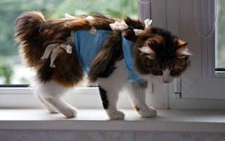 Послеоперационная повязка для кошек