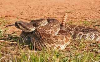 Змеи пустыни названия