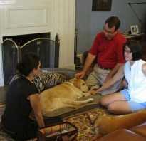 Лекарство от агрессии для собак