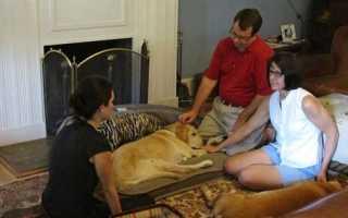 Успокоительные лекарства для собак