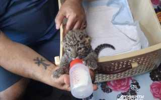 Черепаха домашнее животное или дикое