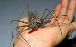 К какому разряду относятся пауки