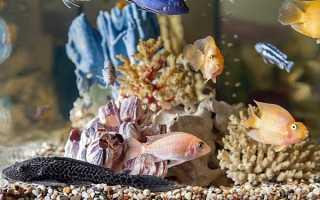 Какие рыбы совместимы