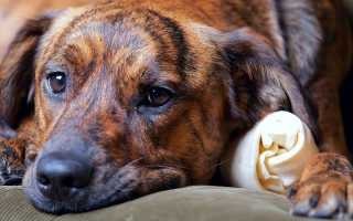 Лекарства от панкреатита у собак