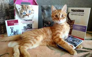 Проплан для кошек сухой виды