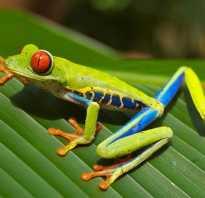 Сколько в мире лягушек
