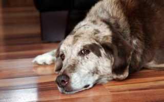 Капли от цистита для собак