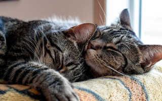Что значит вязка у кошек