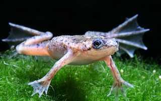 Сколько живут лягушки в аквариуме