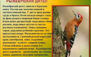 Исчезнувшие птицы россии
