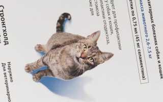 Стронгхолд для кошек как наносить видео