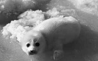 Реферат животные находящиеся на грани исчезновения
