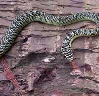 Морские змеи на пхукете