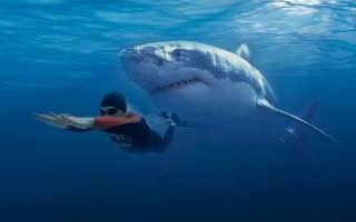 Все о белой акуле