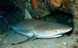 Плавают ли акулы когда спят